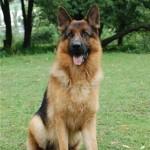 Пес Меркури стал абсолютным победителем выставки собак