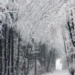 С обморожениями госпитализированы 23 волынян